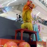 1 northern lion dance
