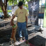 3 puppy adoption Ipoh