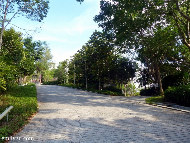 2. tree-lined pathway to the resort proper