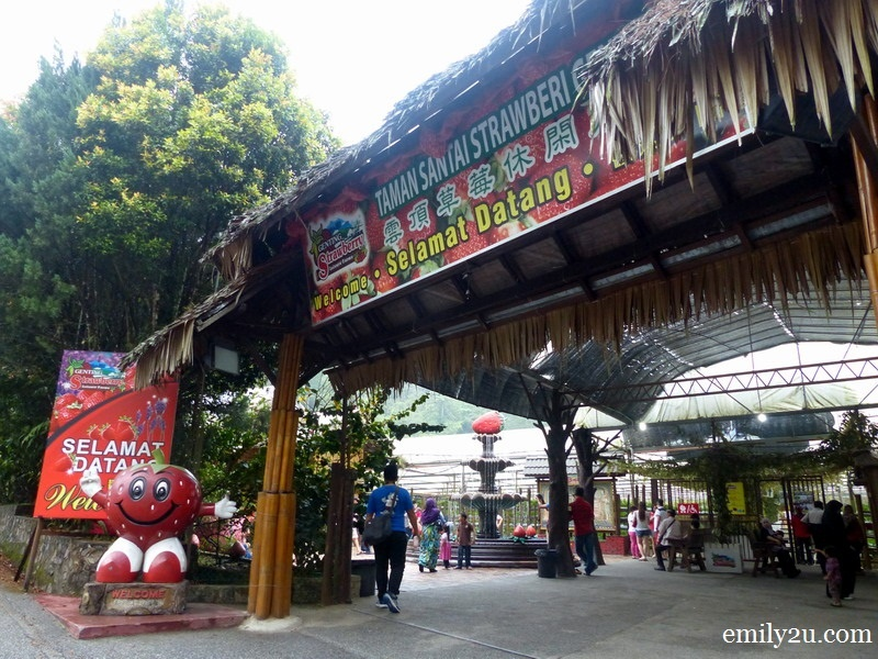 1. Genting Strawberry Leisure Farm