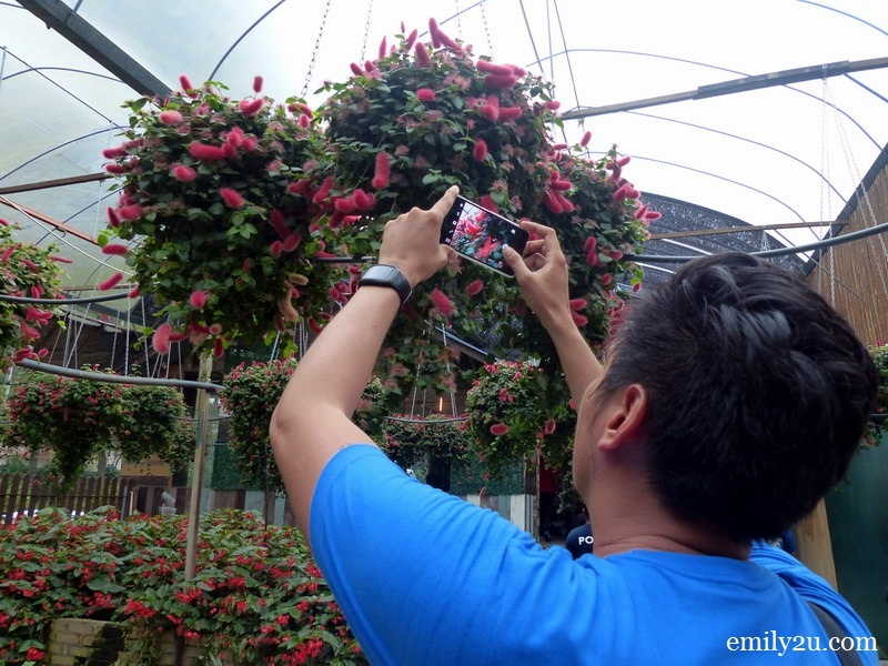 10. Edgar takes a shot of these flowers with his mobile phone