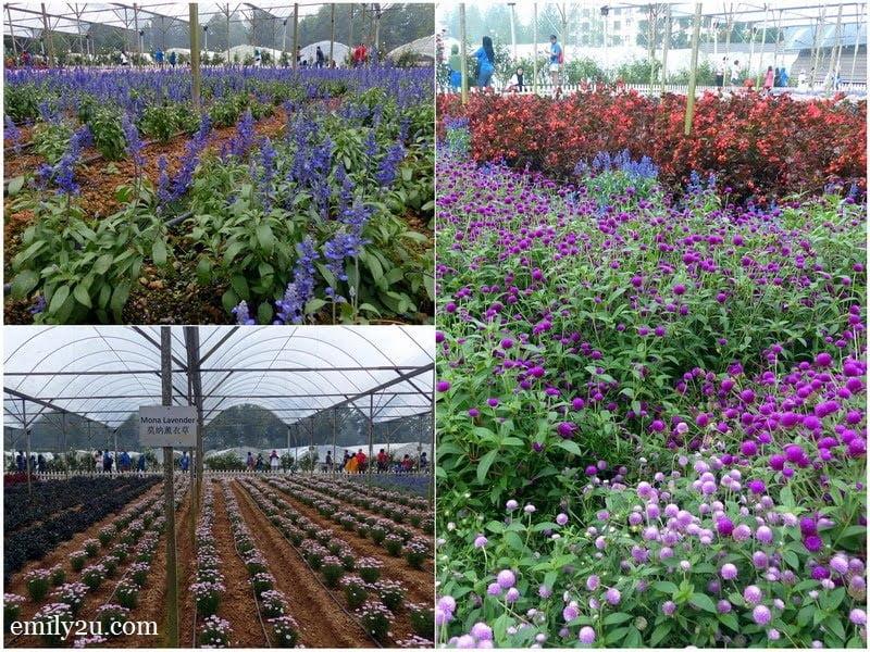 8. Lavender Garden