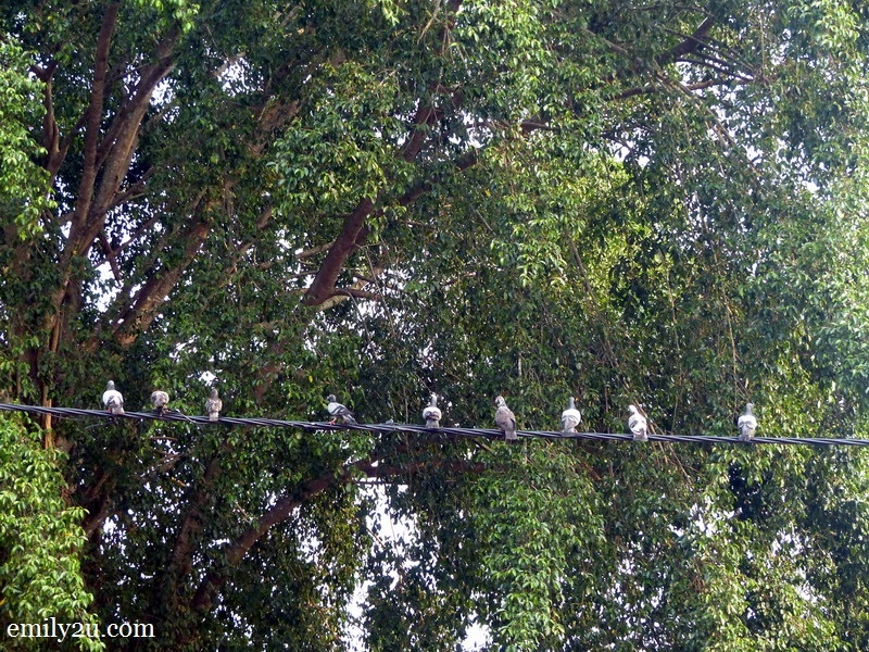 4. pigeons in a row