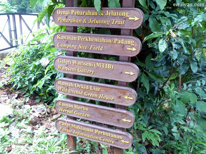 5. jungle attractions