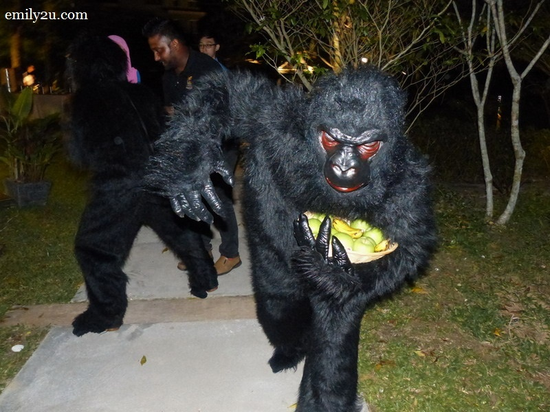 9. a couple of gorillas from 'Africa' makes an appearance to the delight of guests