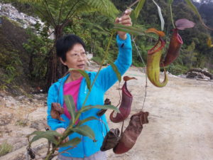 1. Pat Ang rescues a mature pitcher plant
