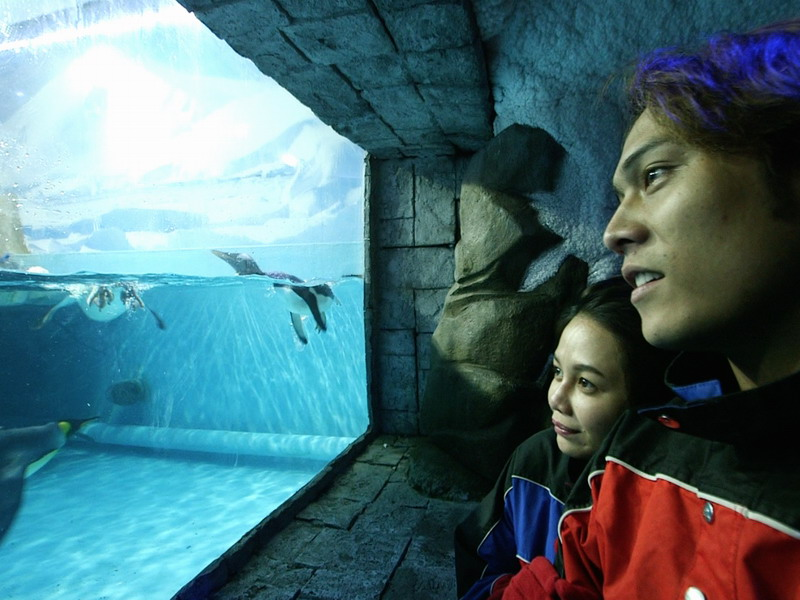 4. Dubai Aquarium and Underwater Zoo