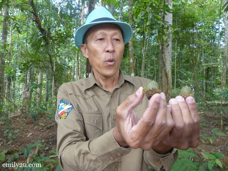 4. Eddie Chan holds up a couple of acorns