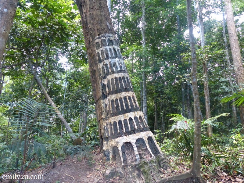 5. 'Leaning Tower of Pisa' in the forest