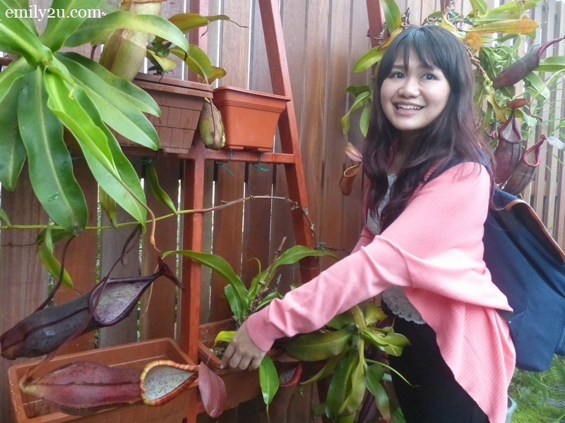 5. Miriam decorates the Nepenthes Conservatory Display Wall with pitcher plants