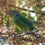 9 birdwatching Genting Highlands
