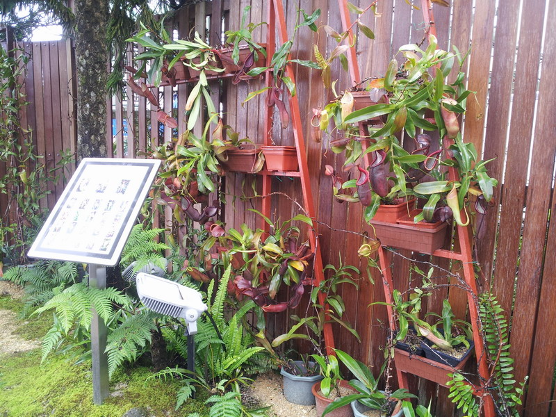 6. Nepenthes Conservation Display Wall