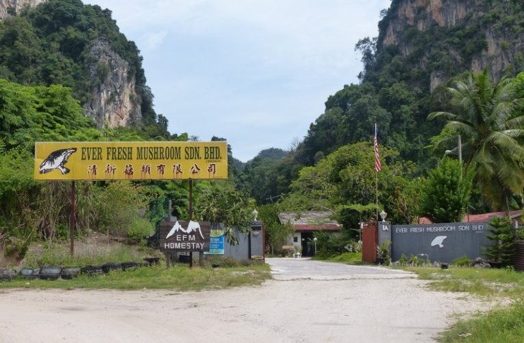 EFM Nature Homestay – Mini Rest House in Gunung Rapat, Ipoh
