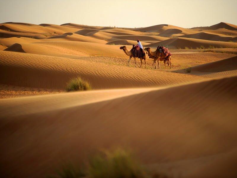2. Camel Riding in Dubai Desert