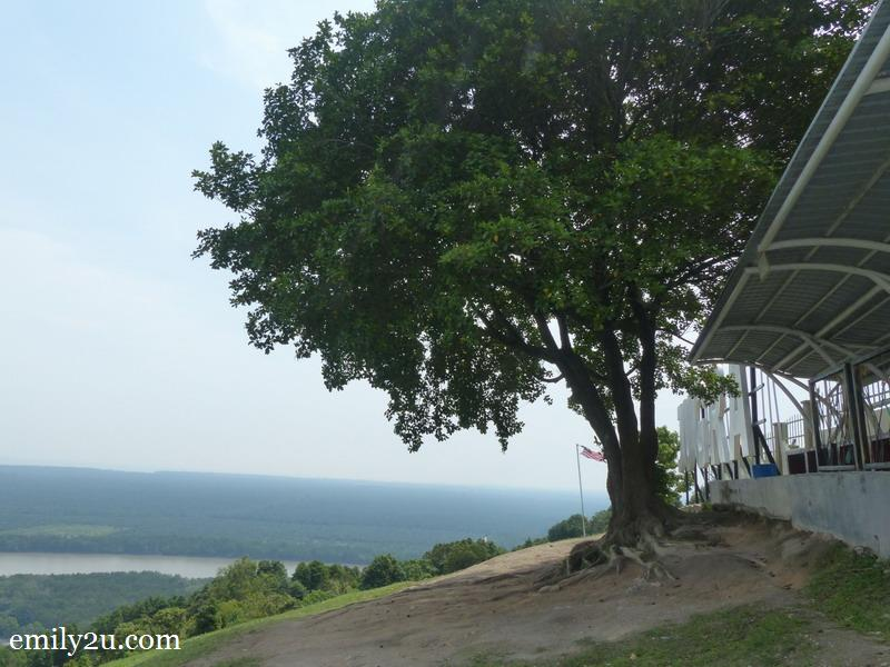 3. Bukit Jugra and its original tree