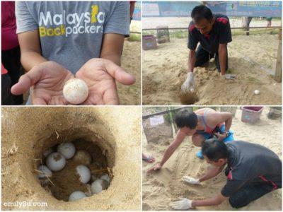 16. turtle egg planting