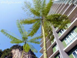 brazilian-fern-tree