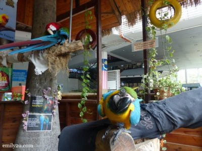 1. parrots at  KL Tower Mini Zoo