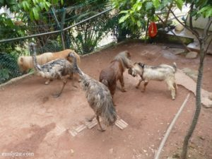 11-kl-tower-mini-zoo