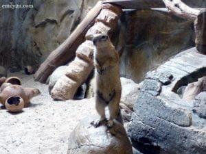 9-kl-tower-mini-zoo