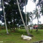 A Visit to Kampung Alai Homestay in Melaka