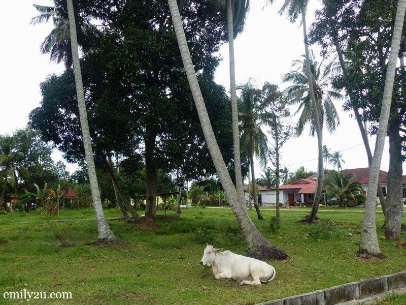 1. Kampung Alai, Melaka