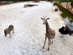 12-giraffe-and-friends