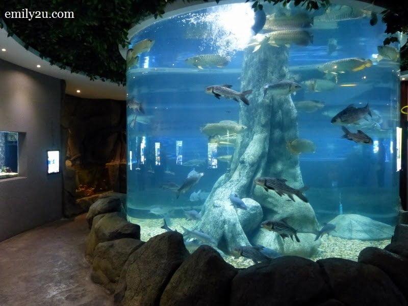 5. pillar aquarium
