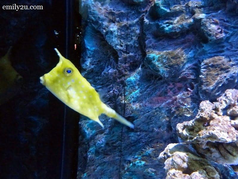 7. Boxfish