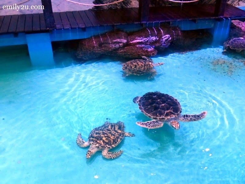 9. Hawksbill Turtle