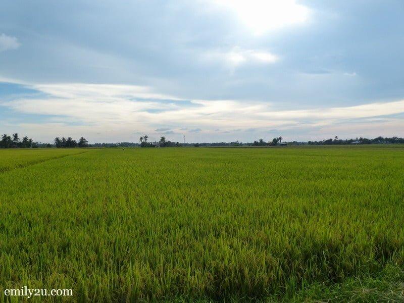 1. Dorani Homestay, Sungai Haji Dorani, Selangor