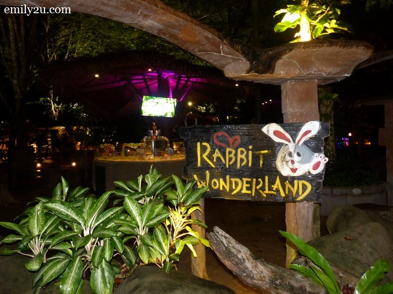 1. to Rabbit Wonderland