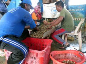 13 Kuala Sungai Buloh