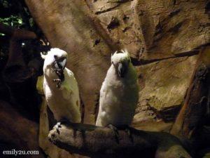 13 Lost World of Tambun Night Safari