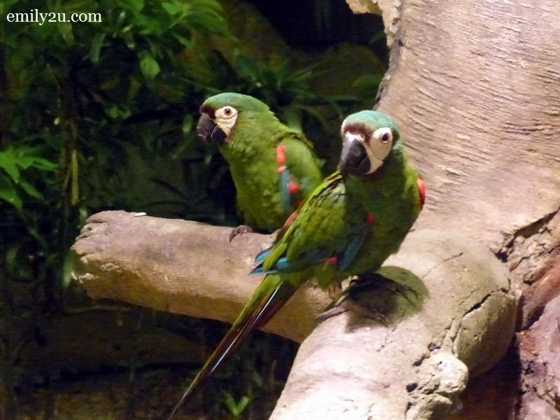 14. macaws