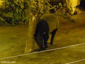 5 Lost World of Tambun Night Safari