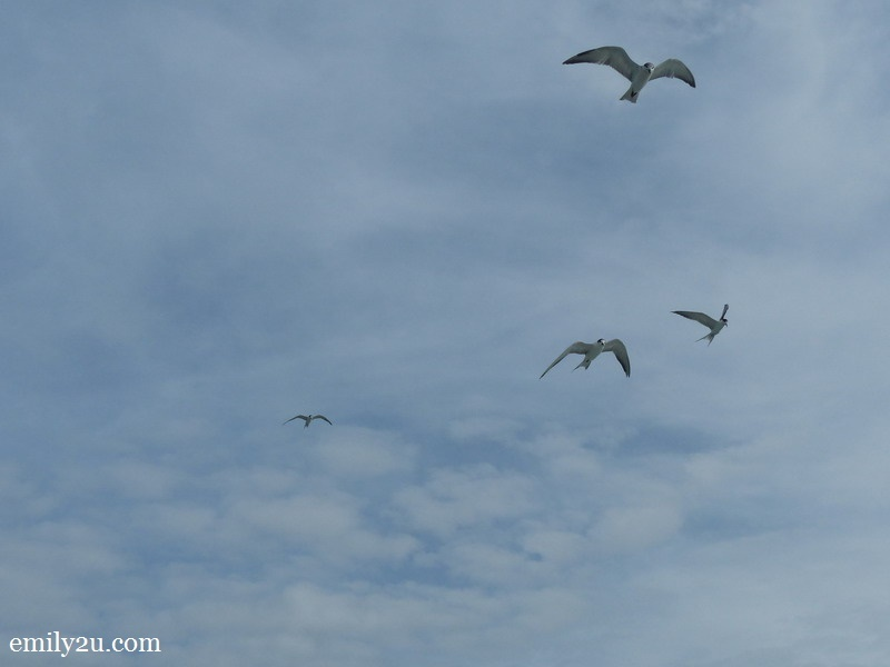 9. birds chasing our boat