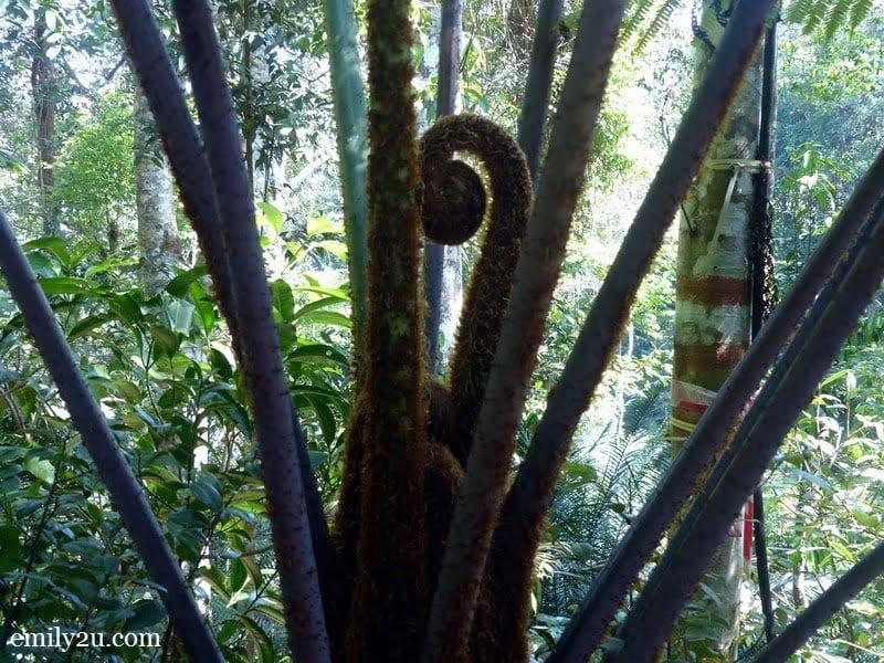 16. Monkey Tail Fern
