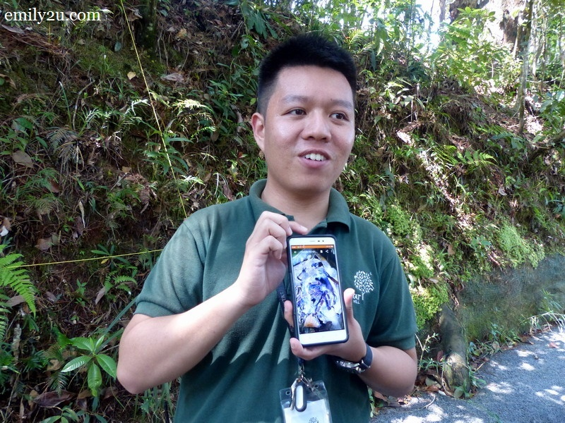 13. our guide holds a photo of a tarantula on his phone, discovered at The Habitat