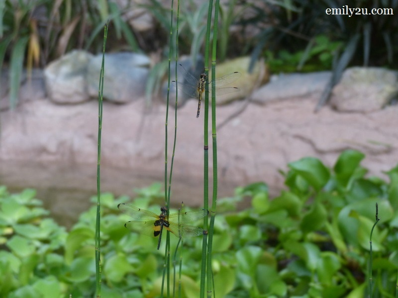 13. dragonflies