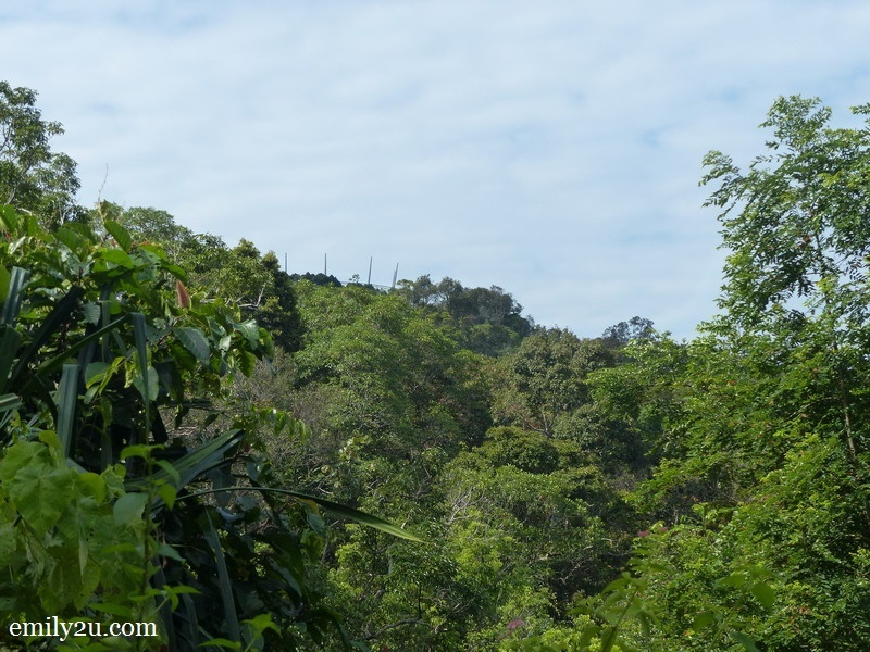 15. Curtis Crest Tree Top Walk on the horizon