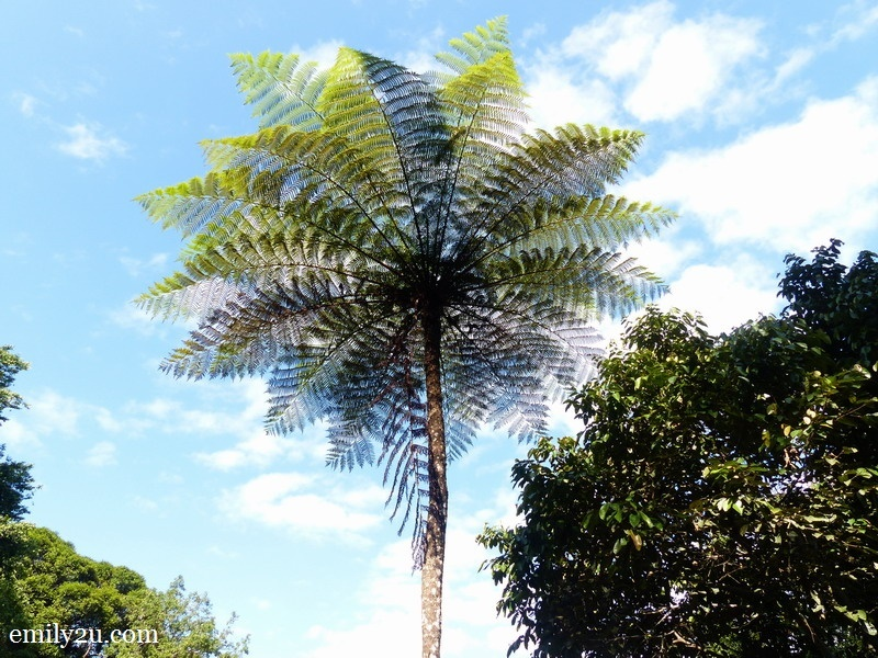 7. Tree Fern