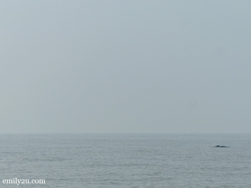 7. spot the dolphin