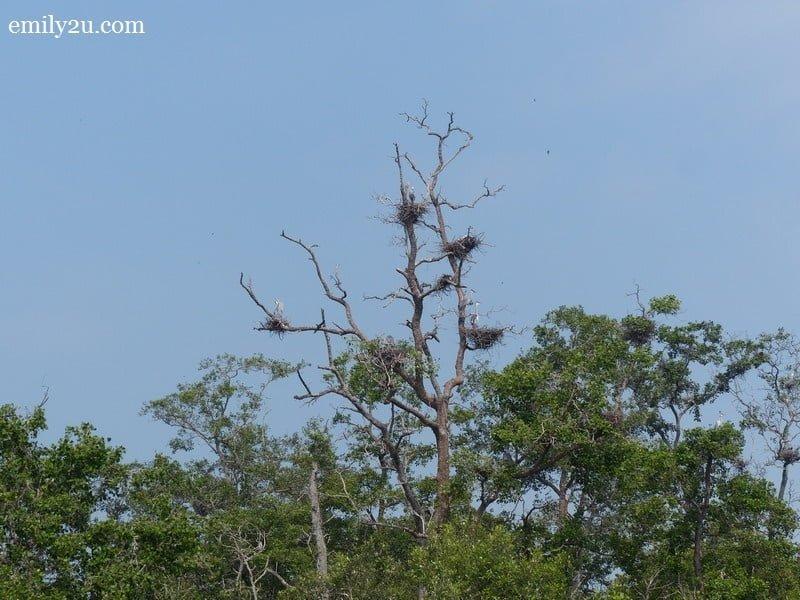 8. birds' nests