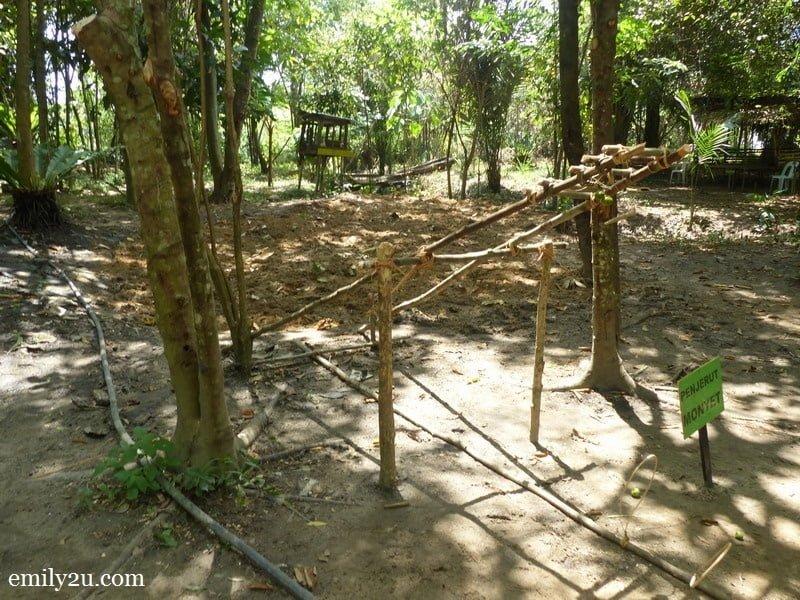 19. monkey trap