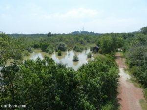 10 Kuala Selangor Nature Park Taman Alam