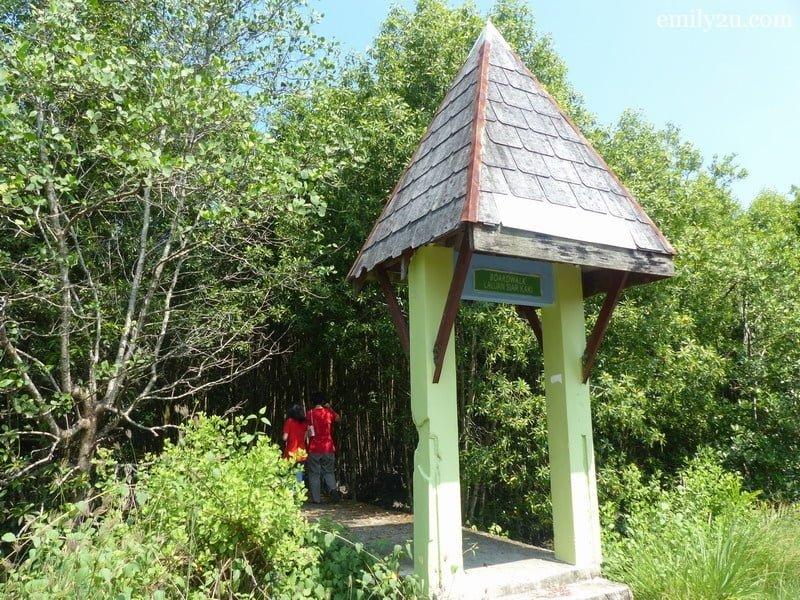 11. mangrove broadwalk
