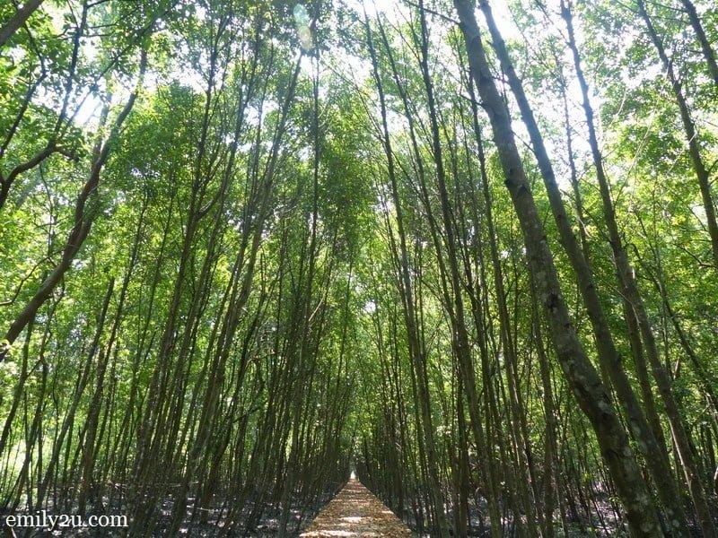 12. Kuala Selangor's answer to Kyoto's Sagano Bamboo Forest