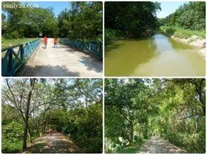 7 Kuala Selangor Nature Park Taman Alam