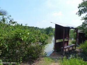 8 Kuala Selangor Nature Park Taman Alam